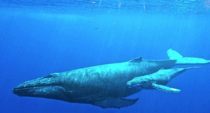 05ナガスクジラ