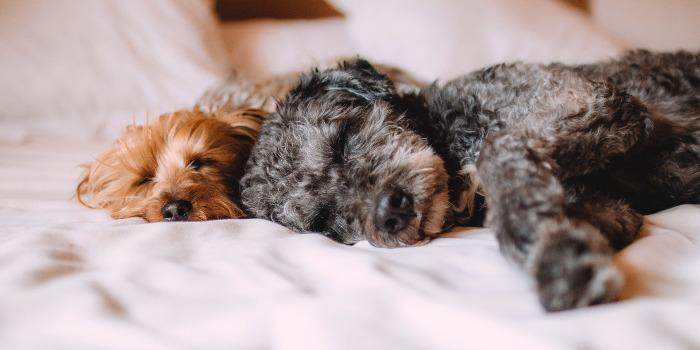 子犬の寝姿
